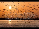 Слово Божье - Псалом 51 - 52 Бог нам Прибежище и Сила
